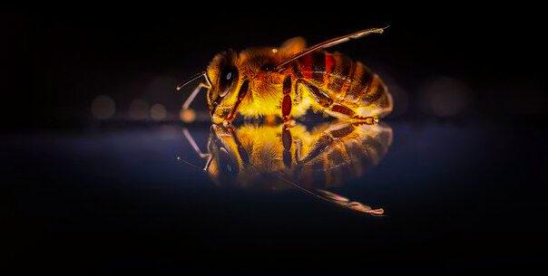 Initiative Bienenhaltung