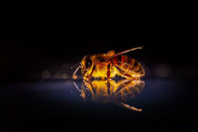 Beekeeping requirements